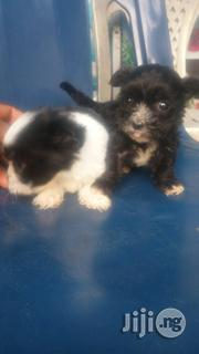 Cute Lhasa Puppies for Sale | Dogs & Puppies for sale in Lagos State, Surulere