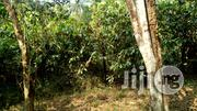 Invest In Agric, Farm Land In Abeokuta | Land & Plots For Sale for sale in Ogun State, Odeda