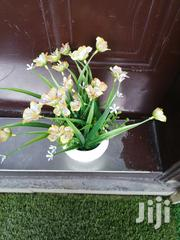 Beautiful Potted Flowers At Sales, Order Now | Garden for sale in Bayelsa State, Kolokuma/Opokuma