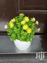 Small Beautiful Potted Cup Flowers For Sale   Garden for sale in Kaduna State, Birnin-Gwari