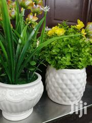 Beautiful Potted Small Flowers At Best Low Prices,Order Yours Now   Garden for sale in Niger State, Bosso