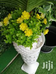 Get Affordable Mini Potted Flowers Nationwide | Garden for sale in Sokoto State, Dange-Shuni