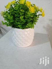 Get Quality Beautified Cup Flowers For Cheap Prices | Garden for sale in Delta State, Ukwuani