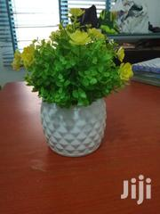 Garden Cup Flowers For Sale   Garden for sale in Kebbi State, Augie