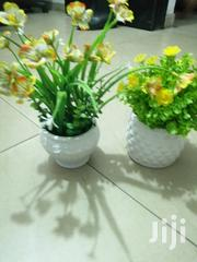 Mini Potted Cup Flowers For Decoration | Garden for sale in Bayelsa State, Ekeremor