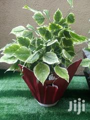 Flower Vase Planter For Sale Nationwide | Home Accessories for sale in Ebonyi State, Ebonyi