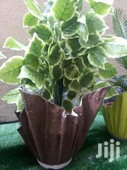 Get Affordable Cemented Polymer Vase | Home Accessories for sale in Ebonyi State, Afikpo South
