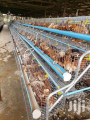 Battery Cage For Layers | Farm Machinery & Equipment for sale in Lagos State, Lekki Phase 1