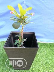 Get Your Fancy Flower Planter Fo Sale   Manufacturing Services for sale in Cross River State, Abi
