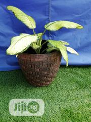 Ceramic Conical Shaped Flower Pot   Garden for sale in Ebonyi State, Ohaukwu