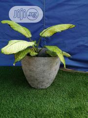 Dealers Of Quality Flowers Pot   Garden for sale in Plateau State, Kanke