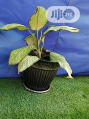 Quality Affordable Outdoor Flower Pot For Sale   Garden for sale in Plateau State, Riyom