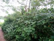 3 Plots of Land Fenced at Housing Estate Akure | Land & Plots For Sale for sale in Ondo State, Akure