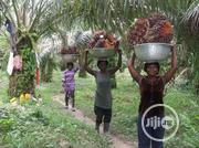 Fruitful Palm Tree Plantation On 75plots Of Land At Imo State For Sale | Land & Plots For Sale for sale in Imo State, Ohaji/Egbema