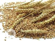 Wheat Seeds In Tonnes   Feeds, Supplements & Seeds for sale in Lagos State