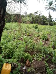 Farm Lands for Sale | Land & Plots For Sale for sale in Osun State, Aiyedire