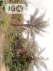 Farmland Land for Sale | Land & Plots For Sale for sale in Cross River State, Biase