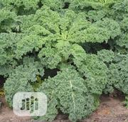 1kg Of Kale Cabbage | Meals & Drinks for sale in Lagos State, Lagos Island