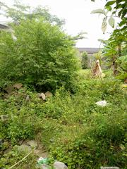 4 Plots Of Dry Land With C Of O Facing Express At Bolade Oshodi | Land & Plots For Sale for sale in Lagos State, Oshodi-Isolo