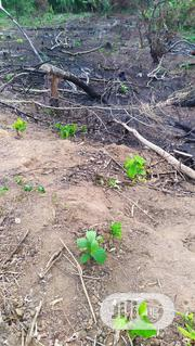 100 Acres Of Land Farming(Crop And Animal Husbandry)And Management | Land & Plots For Sale for sale in Ogun State, Obafemi-Owode