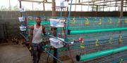 Battery Cage | Farm Machinery & Equipment for sale in Lagos State, Ikorodu