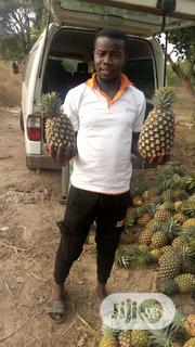 Pineapple For Sale | Meals & Drinks for sale in Oyo State, Surulere-Oyo