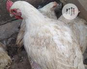 Healthy Chickens | Livestock & Poultry for sale in Kaduna State, Igabi