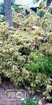 Landscaping And Gardening Service | Landscaping & Gardening Services for sale in Lagos State, Ajah