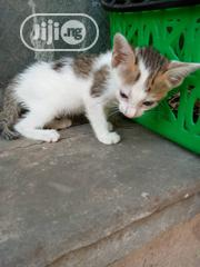 Baby Female Mixed Breed Mongrel (No Breed) | Cats & Kittens for sale in Lagos State, Gbagada